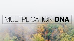 Multiplication DNA